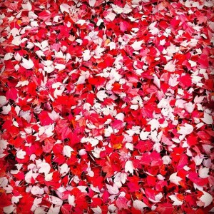 leaves red and white 74928_10100411017624893_1294227500_n