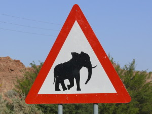 Attention_elephant_desert